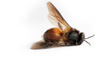 bee for oct 29 cisco blog